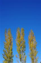 埼玉の真ん中で秋を撮る(2012/11/27)