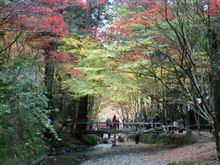 遠江國一宮 小國神社へ紅葉を見に行ってきました