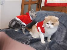 サンタさん来た!