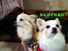 お犬さまたちとまったり(#^.^#)
