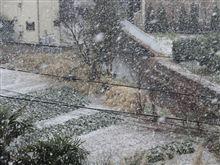 朝からの雨が雪に変わりました
