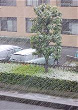 ▽ 雪のおもしろう降りたりし朝・・・