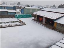 今シーズン初の積雪☆