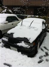 雪・・・どんだけ降ってんだよ。。。