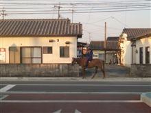 馬ですか!?