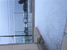 1月23日 雪はこんな感じ
