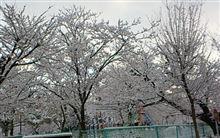 突然の白色の光景