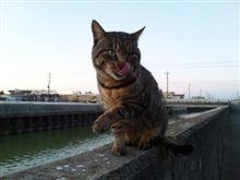 猫日記・・・46