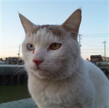 猫日記・・・48  白猫の一日
