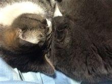 猫は鼻が冷たく寒いようです。