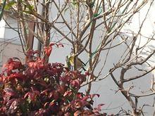 春は、もうそこまで~♪