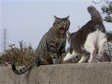 ネコとの戦い その後