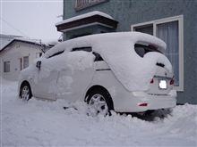 昨日、夕刻降り出した雪