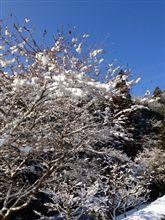 小原山岳部雪情報20130224