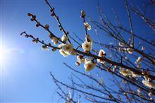 春はすぐそこっ