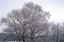 これって樹氷?