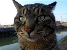 猫日記・・・97