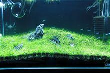 60cm水槽3期 2013年3月1週 5週目 経時変化