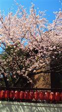 春は来ていた