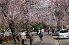 浅間山~多摩霊園の桜を見に!!