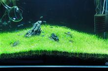 60cm水槽3期 2013年3月3週 7週目 経時変化