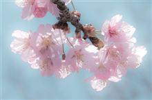 春うらら 〜 ほんわか撮り