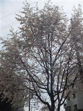 春が一気に!桜ともてぎの参加受理書