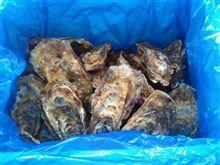 三陸牡蠣復興支援プロジェクト復興かきが届いたよ