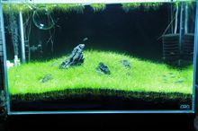 60cm水槽3期 2013年3月4週 8週目 経時変化