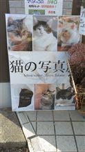 猫の写真展♪