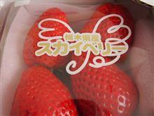 イチゴ  苺  いちご