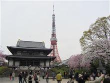 桜最前線を探して ~ 東京都港区・増上寺 ~