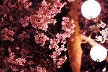 夜の桜トンネル