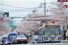 ◆◆6連休4日目は桜とかふれあいバス◆◆