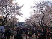 東京桜めぐり