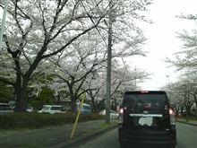 桜も綺麗でした