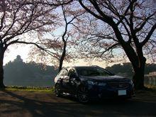 桜とお城とツアラーと