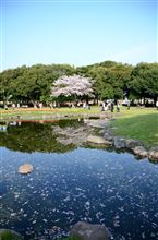 桜な土曜日♪