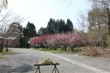 梅~桜~グルメ~すないの郷