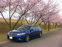 桜とツアラー