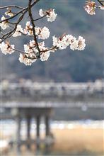 桜満開の京都・嵐山に行ってきました♪