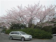 桜とアベンシスW…