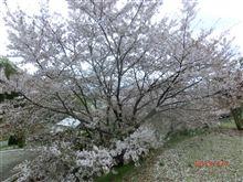 春の嵐のあとで