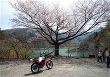 桜を探しに奥多摩へ行ってきました。