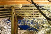 伊那ミーと高遠城址公園の桜