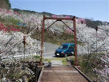 桃の花とつり橋...