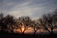 二上山~八重桜と夕景~