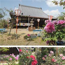 靴下の市と、牡丹のきれいな新家長福寺。
