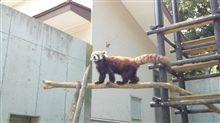 今日は千葉動物園…(^。^;)