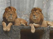 今日は、動物園へ!